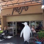 Нагарийский пингвин: место встречи изменить нельзя
