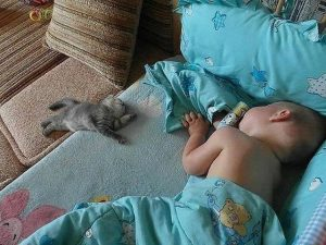 Наконец-то мафия спит!