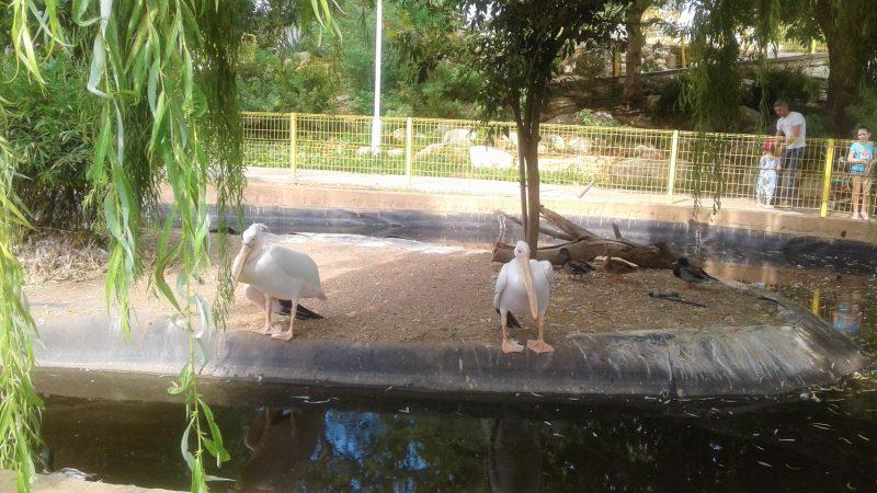 Зоопарк приглашает на каникулы в Песах