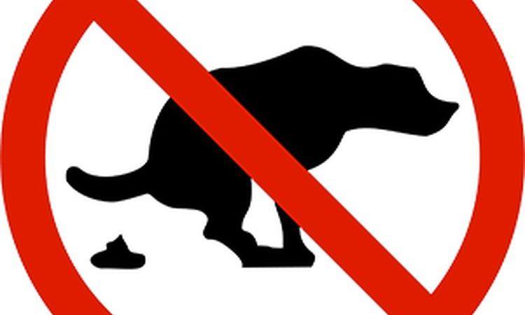 Городской закон о собаках