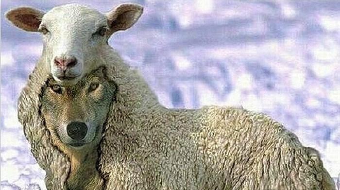 Как «кинуть» Израиль, или волки в овечьих шкурах