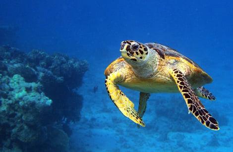 Спасаем морских черепах!