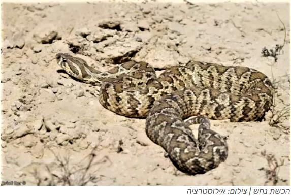 Змея укусила 25-летнего мужчину в районе Нагарии